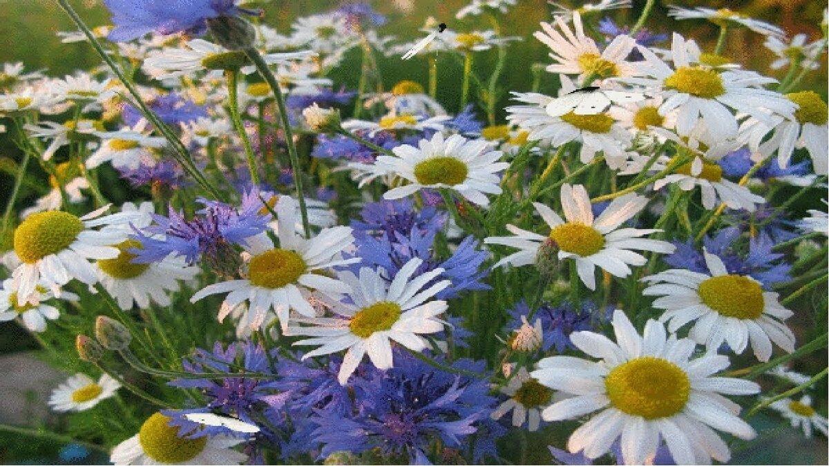государства фото гифка поле с полевыми цветами сожалению всё