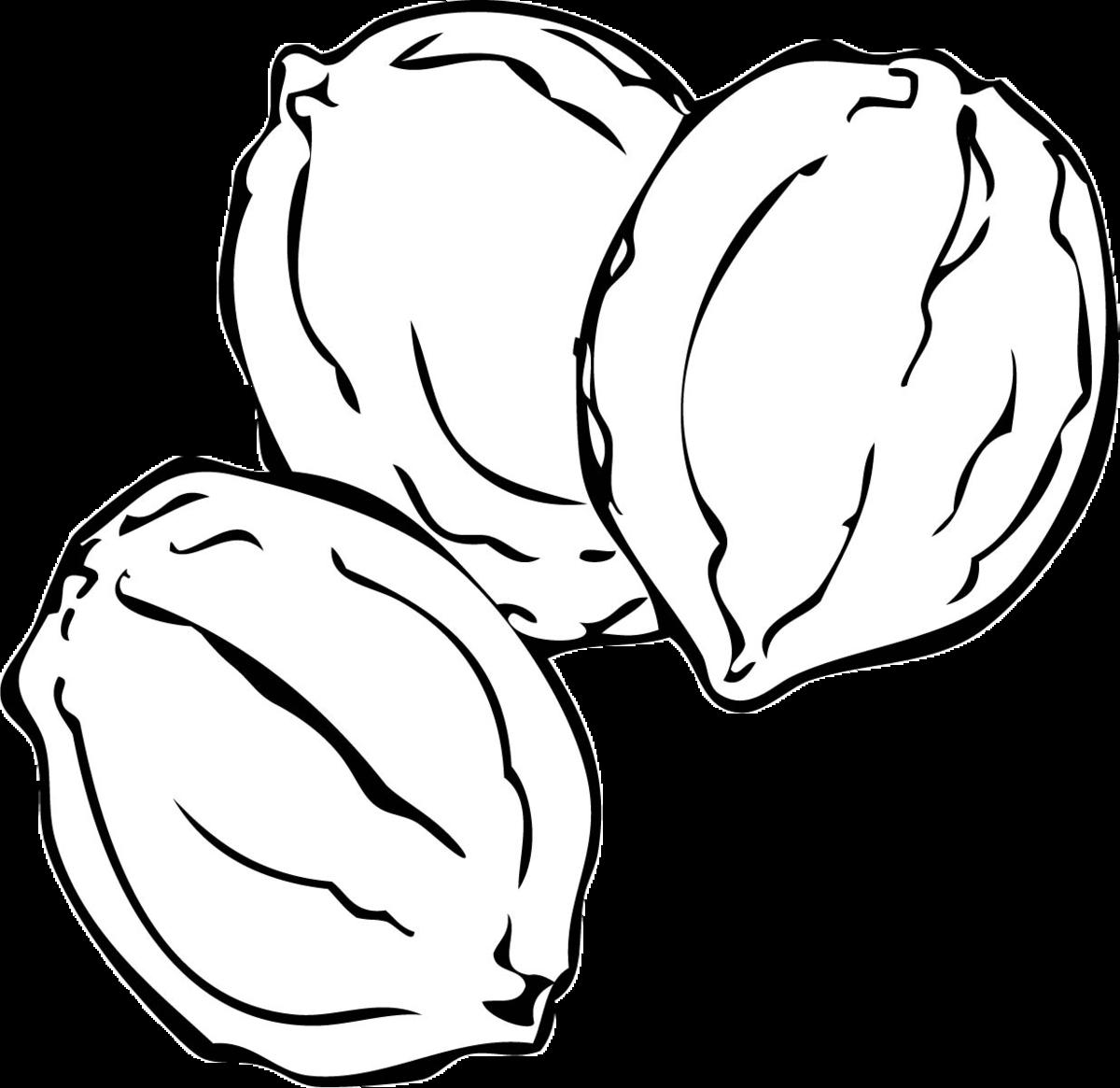 Картинка раскраска орехи
