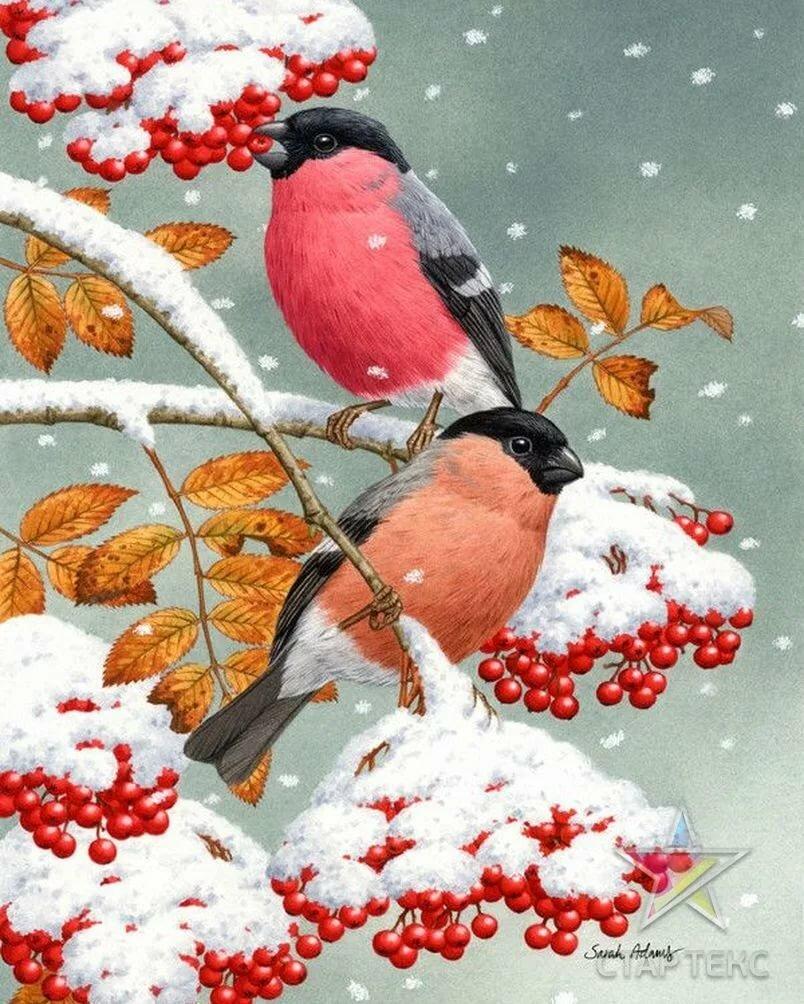 картинки зимние красивые на телефон с рябиной миронов