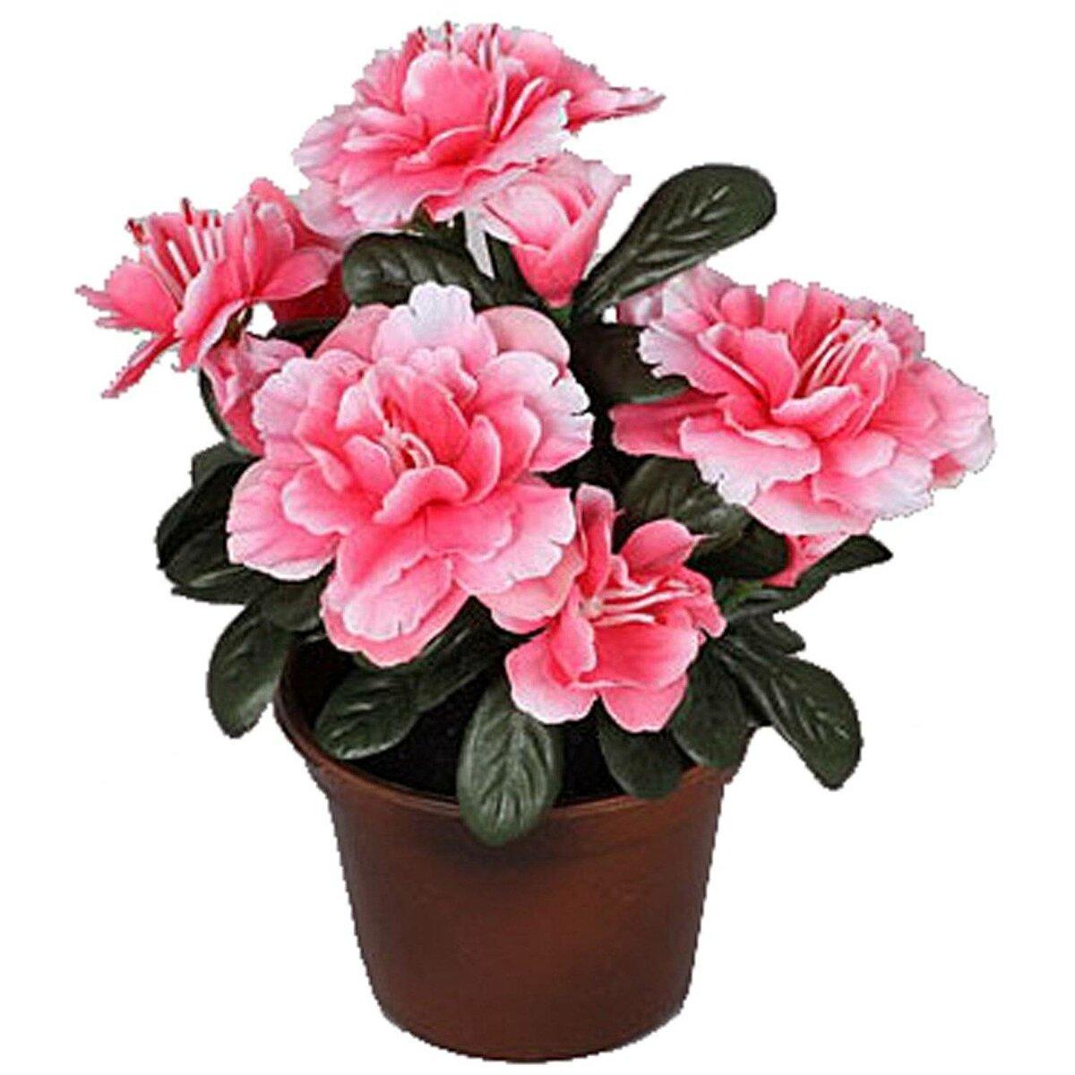 картинки розовых комнатных цветов и их названия разошлась, живут