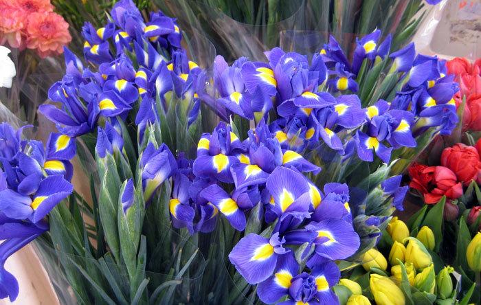 Цветок дарят на 8 марта, сердечек