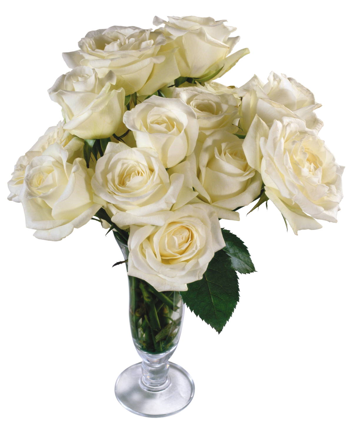 Картинки анимация белых роз