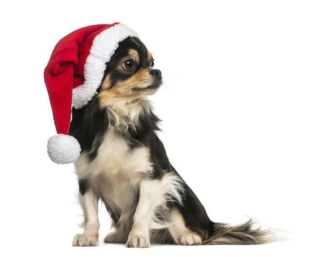 Санта клаус, вид сбоку