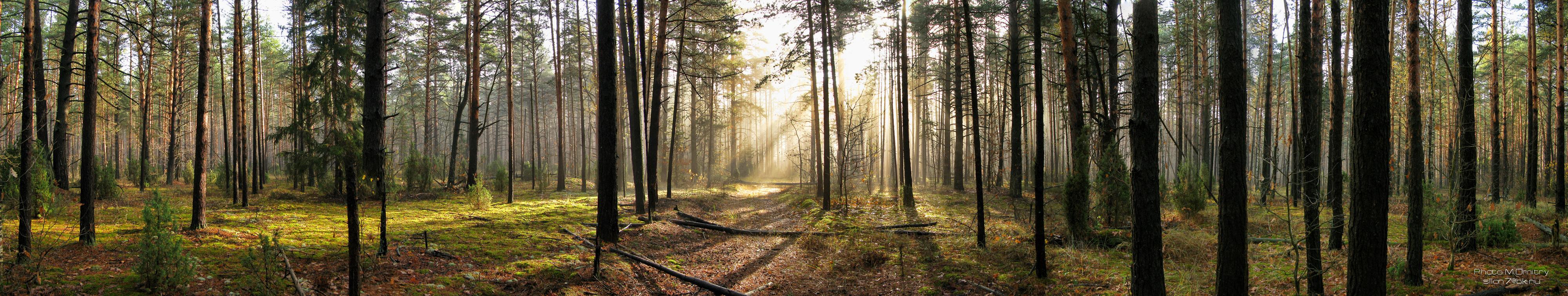 Картинки по запросу панорама леса