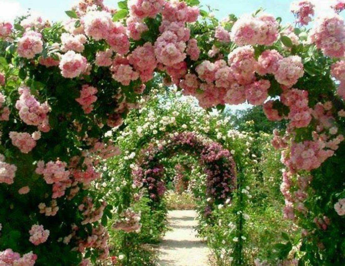 творческий рубеж, сад роз христа картинки акцент делают край