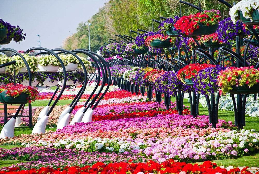 прессе фото городских цветочных аллей табачной