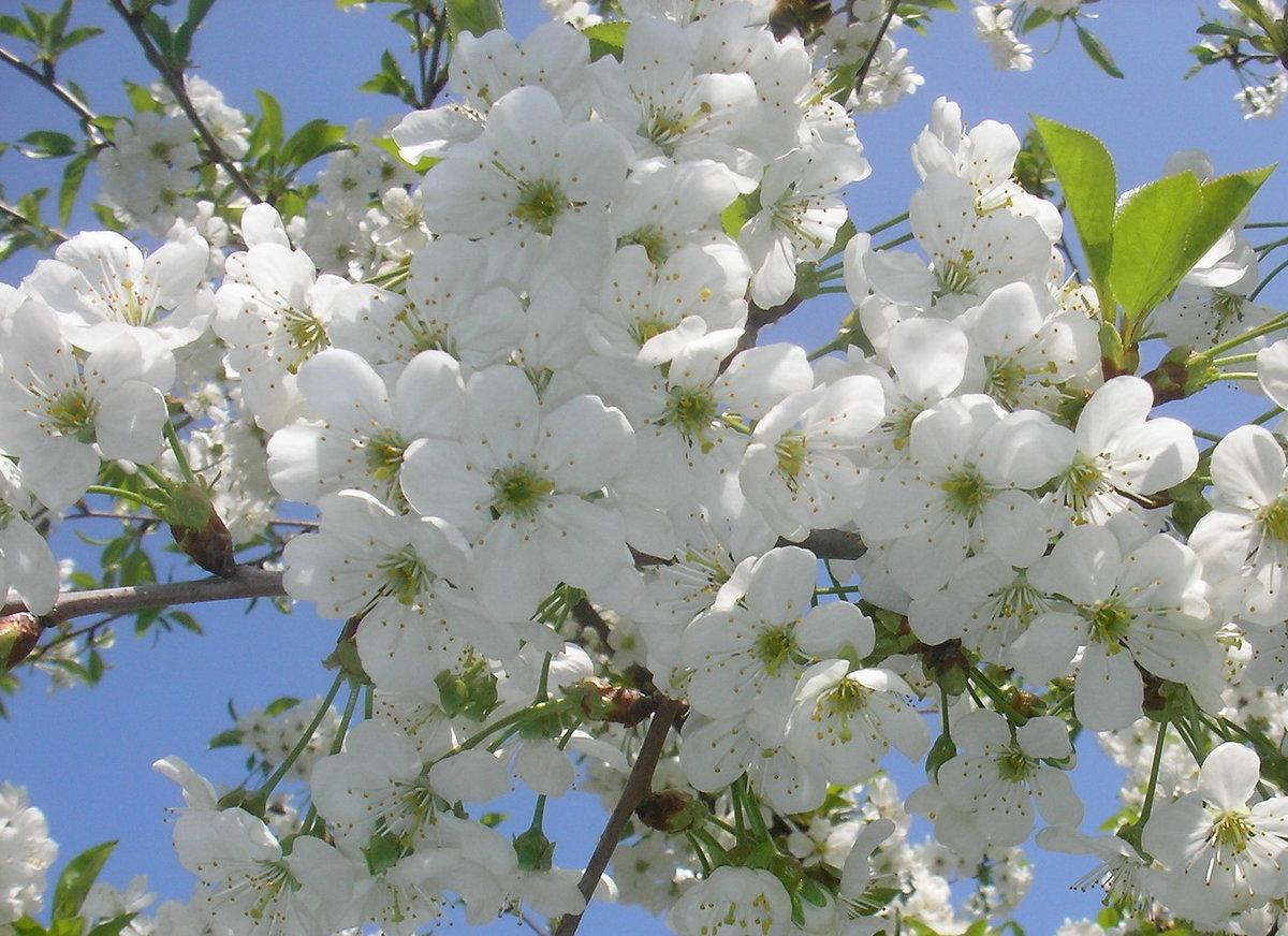 Открытка днем, картинки цветущих садов