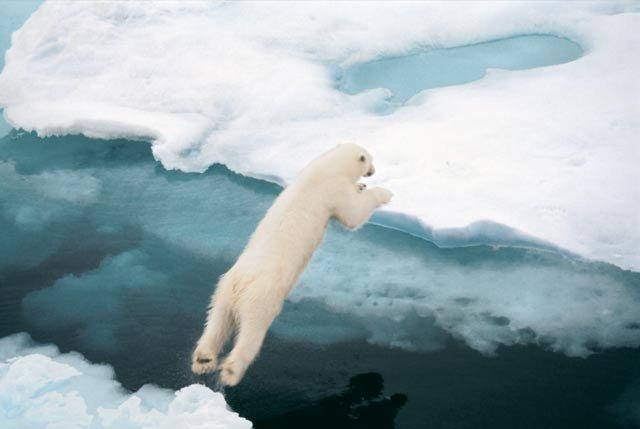 белый медведь фото 3