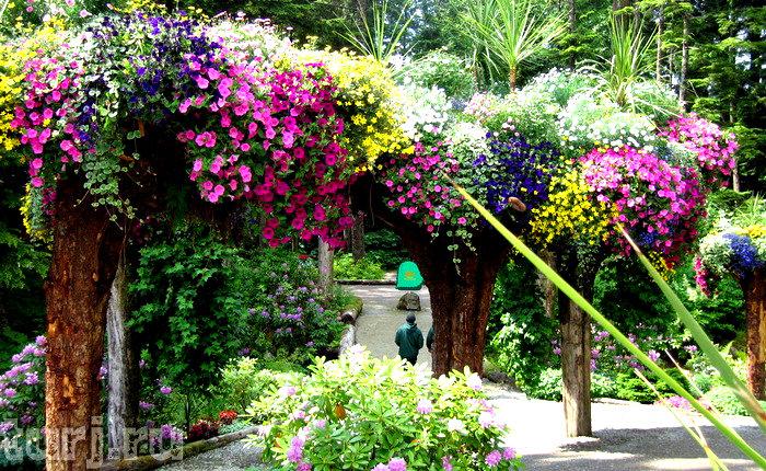 Ботанический сад Glacier Gardens