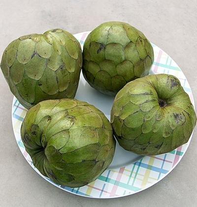 Черимойя (кремовое яблоко)   Черимойя является лиственным растением, произрастающим в высоких горных районах Южной Америки. Плод дерева имеет округлую форму с 3 типами поверхности (бугорчатая, гладкая или смешанная).