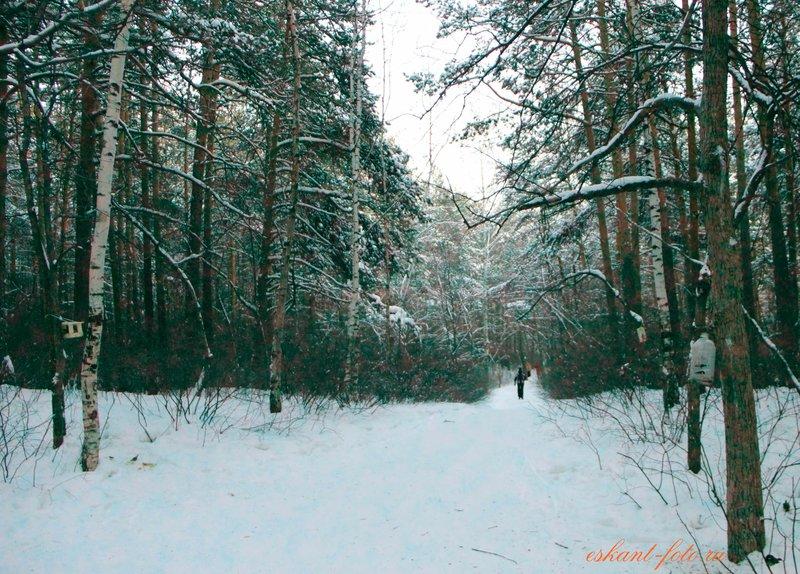 Фотосъемка зимой | Идеи для фотосессий. Уроки фотографии | eskant-foto.ru