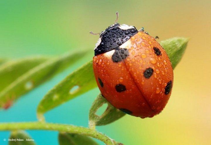 Макро фото насекомых (7)