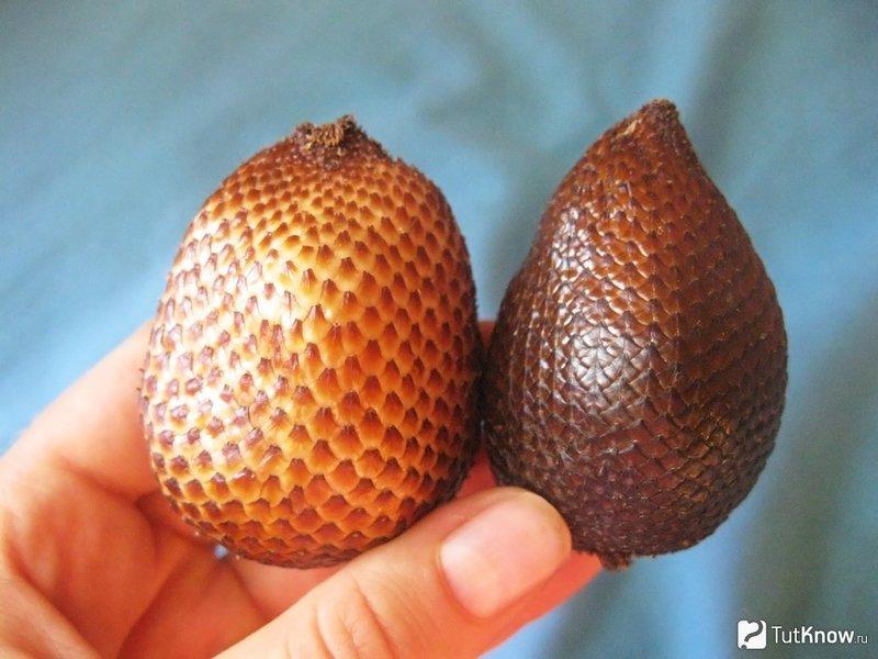 Салак и ракам – змеиный фрукт: полезные свойства и калорийность
