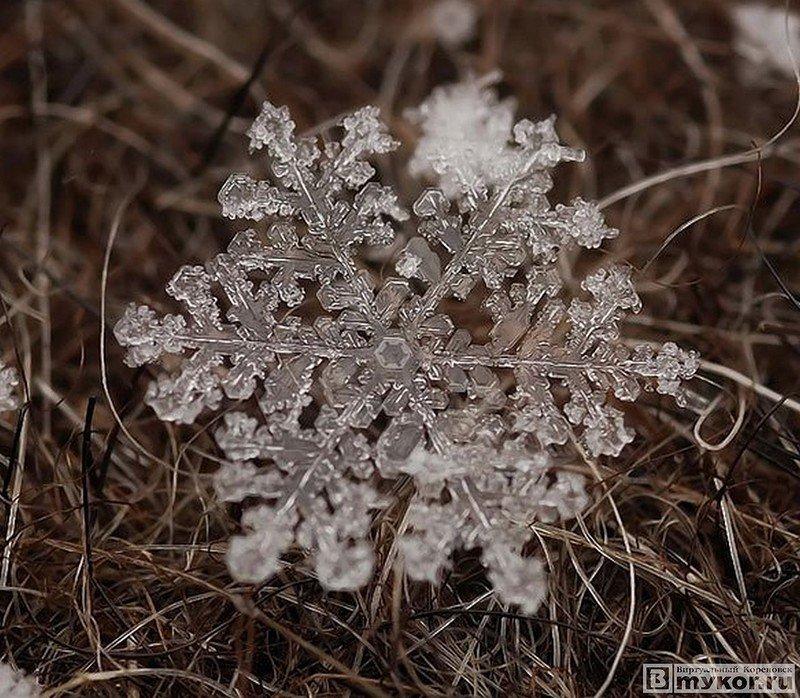 Снежинки в макро-фото — Виртуальный Кореновск