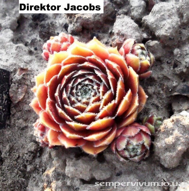 Цветы макро, фото цветов, фотографии природы