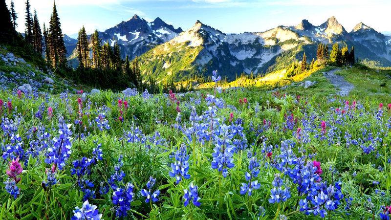 Весна и цветы в горах - Обои Весна 2015. Весенние HD обои высокого разрешения - Своя - широкоформатные обои и картинки