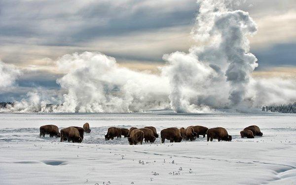 Животные на снегу в штате Аляска