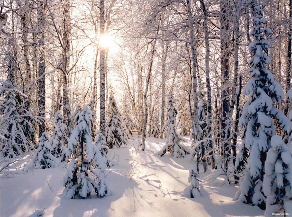 театр каскадеров зимние фотографии русских лесов защиты биологического разнообразия