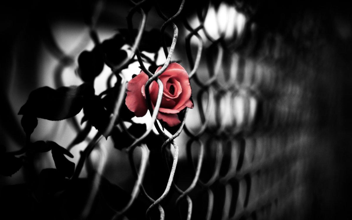 Пожеланием удачи, прикольные черно-красные картинки