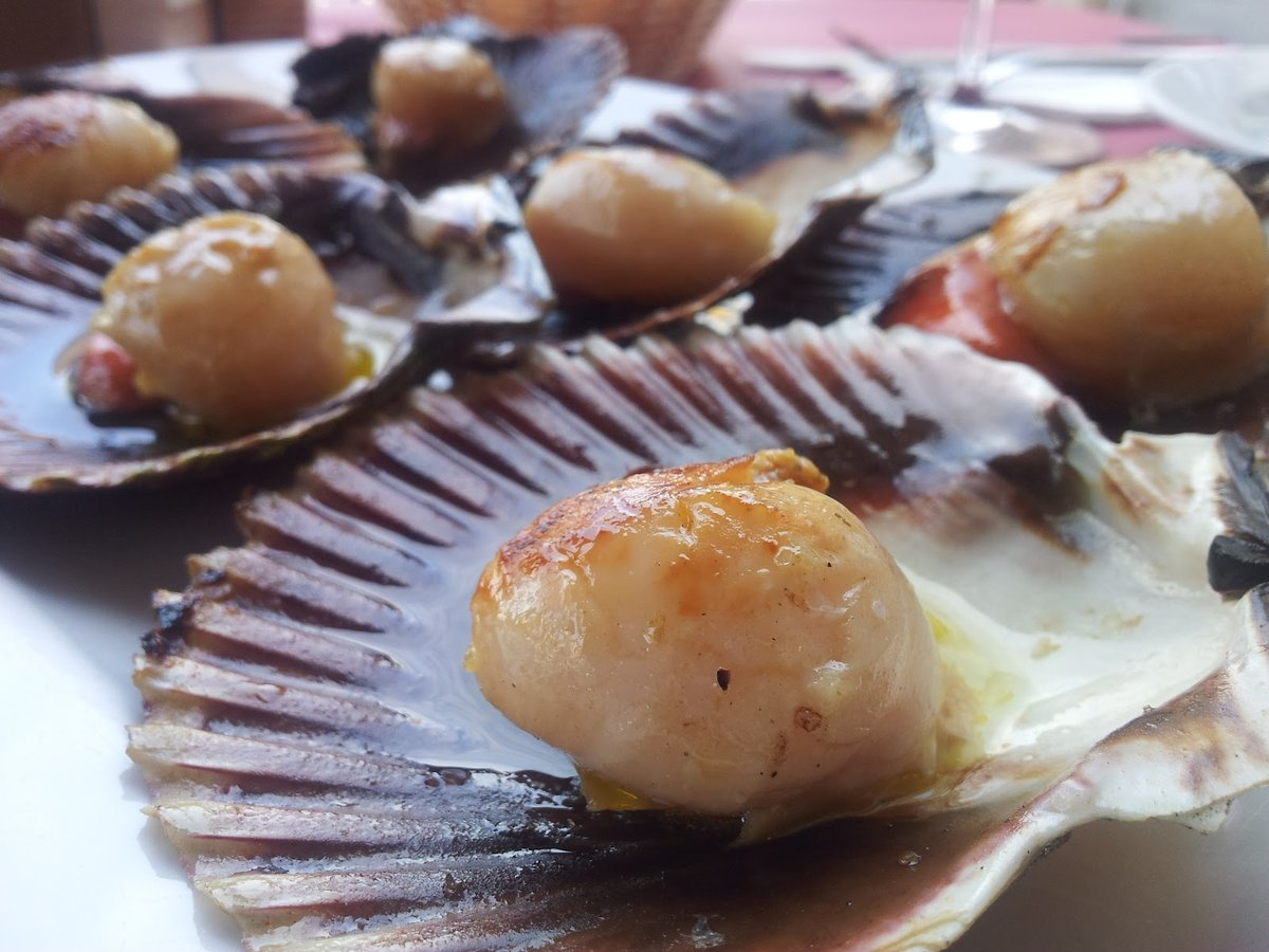 картинки блюд из раковины