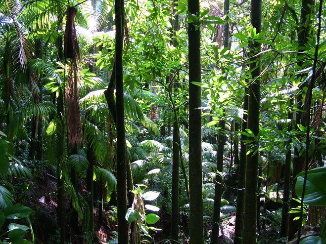 Картинки экваториального леса в южной америке