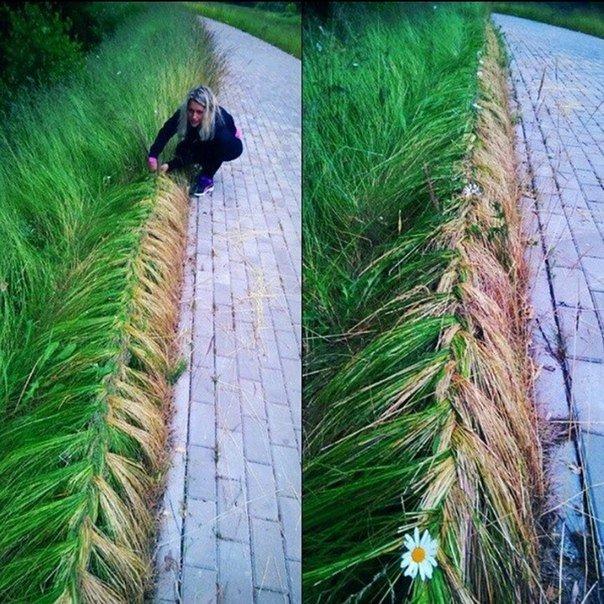 коса трава ландшафтный дизайн приколы