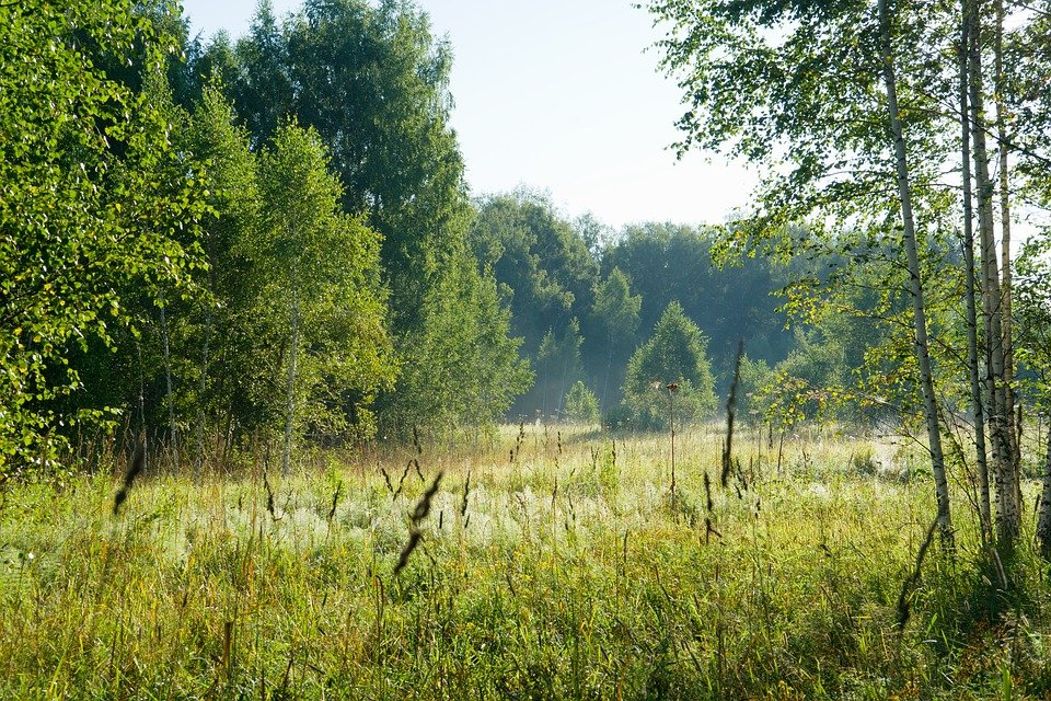Дикий лес картинки