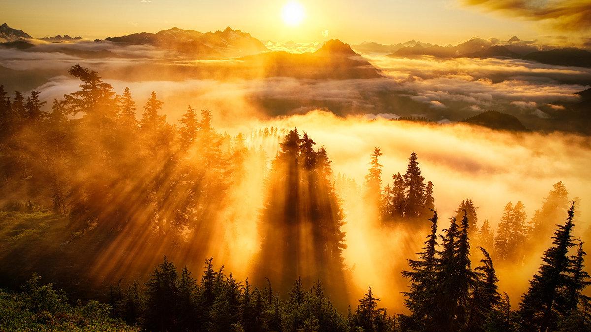 Открытки утро в лесу, днем рождения