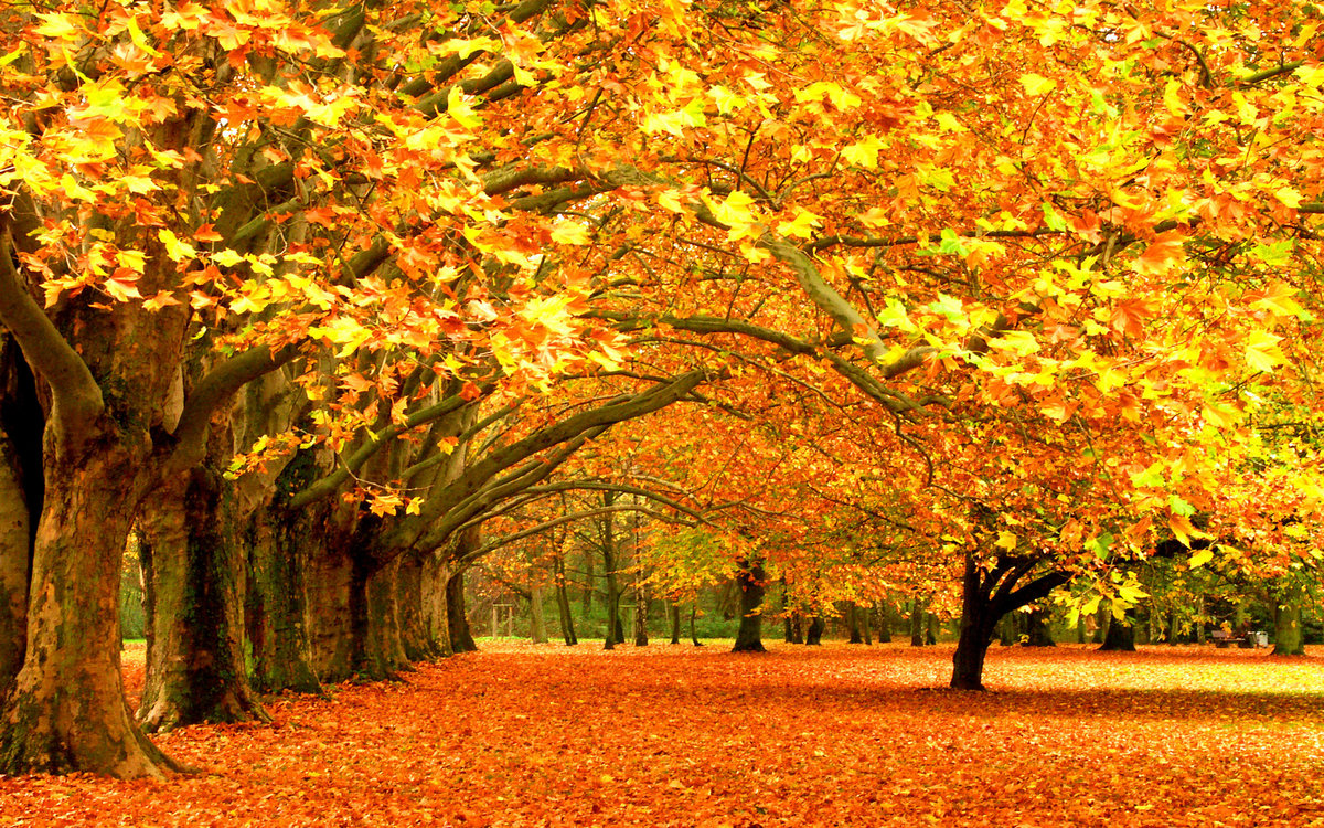 the wonders of autumn Autumn wonderland.