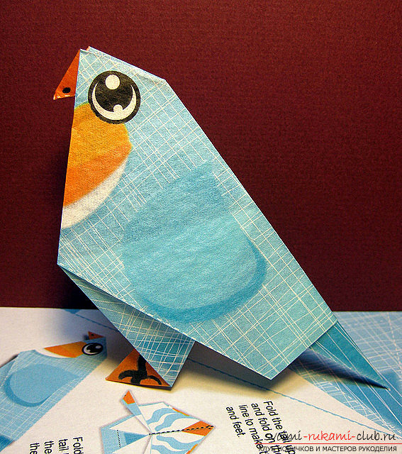Синий попугайчик