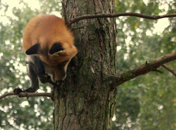 Ой, мне и на дереве удобно!