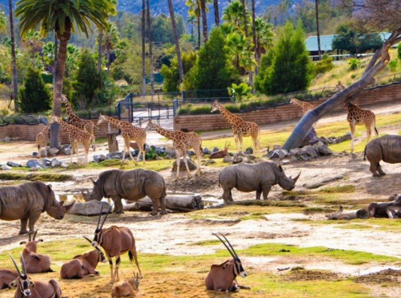 Сафари-парк в Сан-Диего