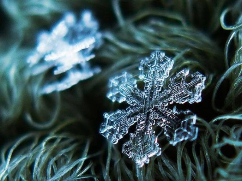 Макрофотография снежинки на зеленых иголочках