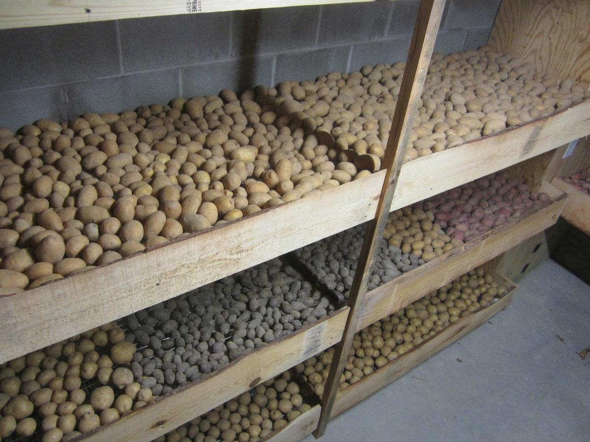 Ящики в подвале своими руками под картошку фото 465