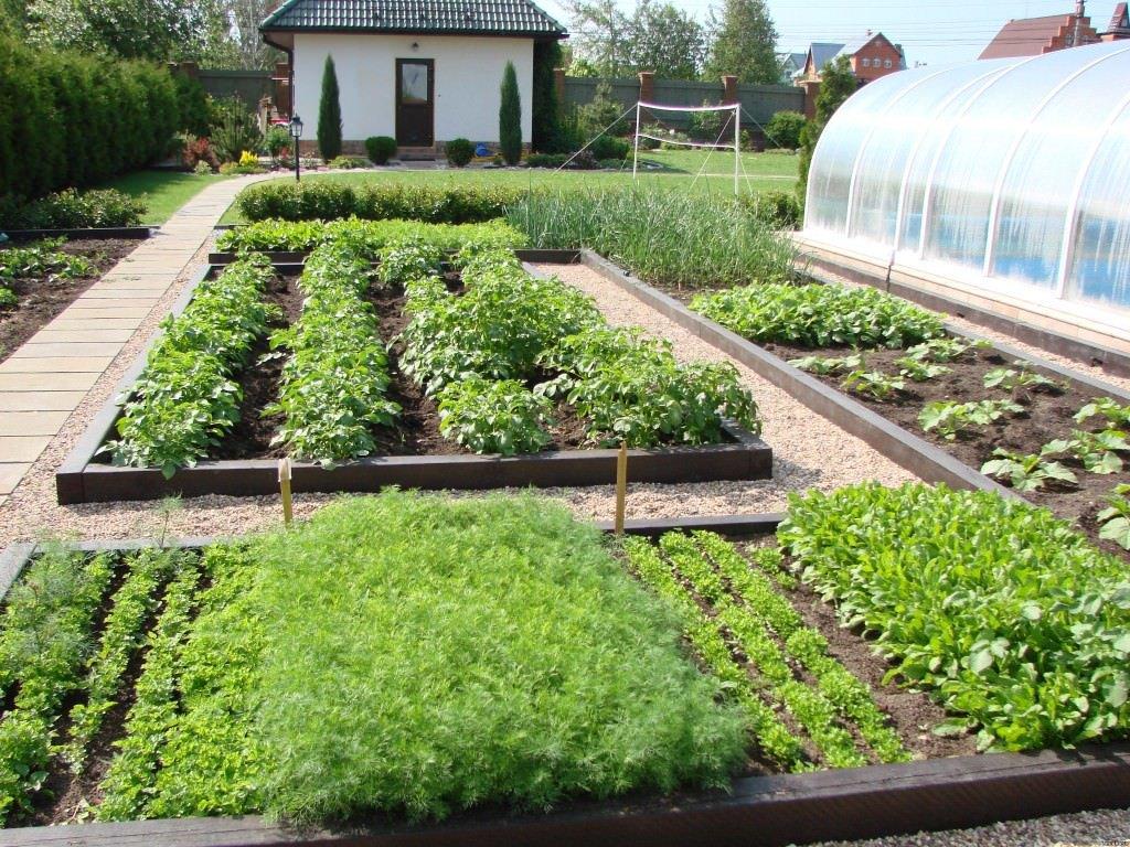 как вырастить сад на участке