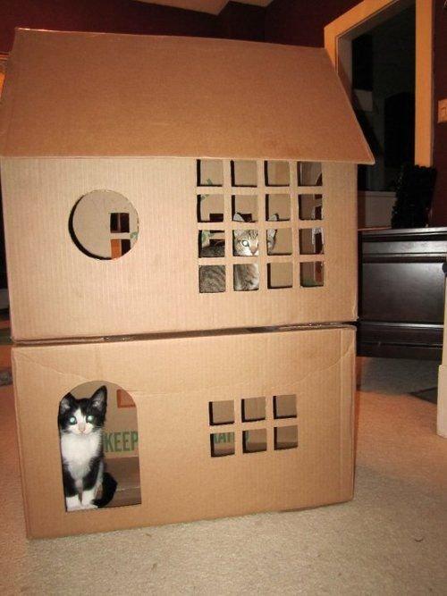 для картонный котенка руками домик своими