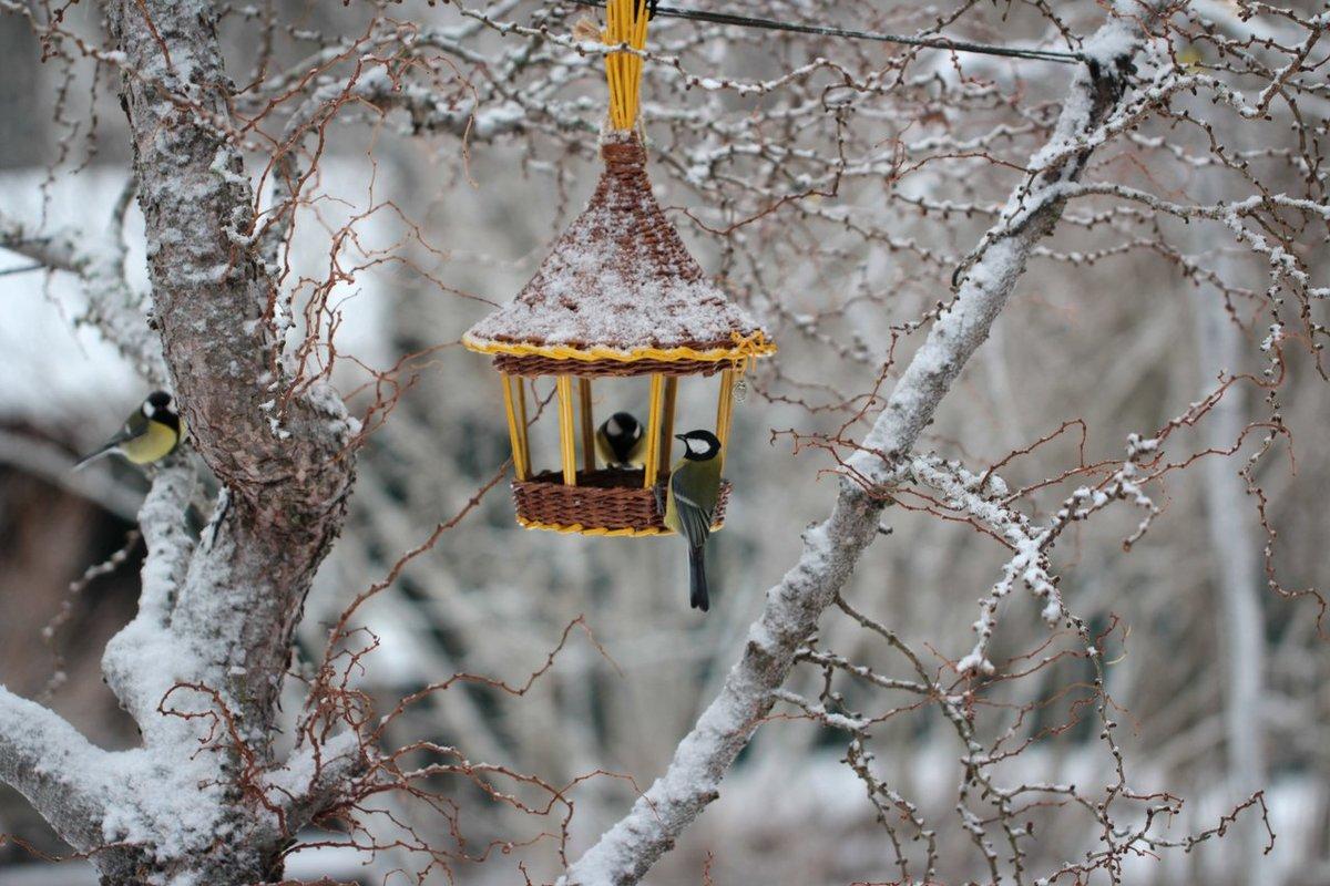 картинки птиц на кармушках удивительно
