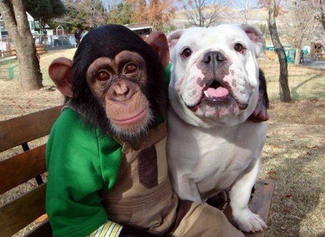 меня смешные картинки про собак и обезьян самая первая