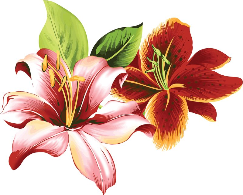 картинки с нарисованными цветами