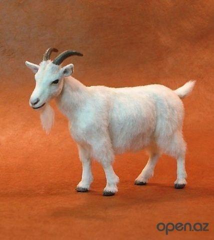 коза стоящея