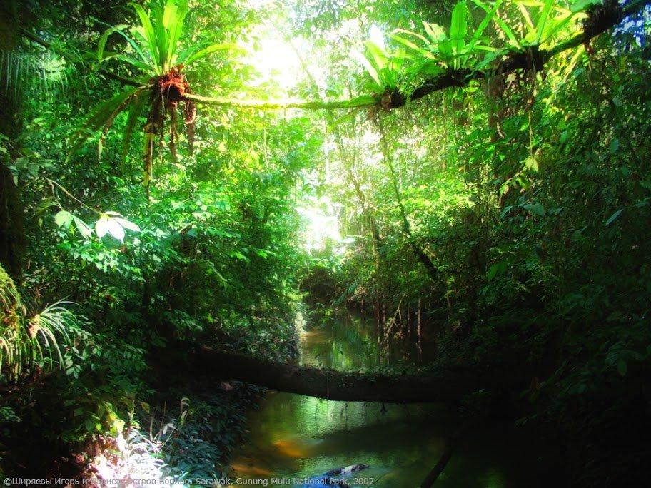 Новогодние елки, джунгли картинки анимация