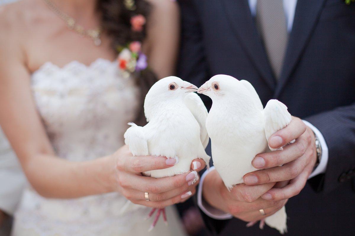 Фото с бракосочетанием прикольные, для сына