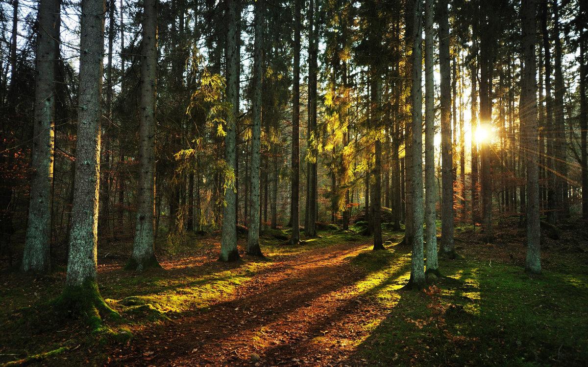 красивые картинки русского леса ними
