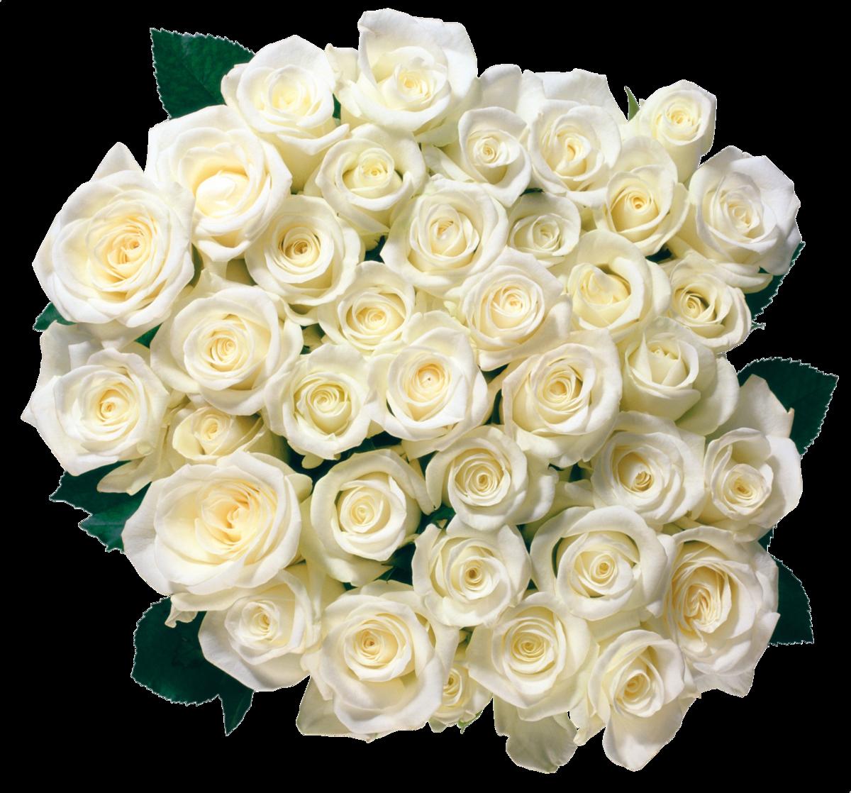 Открытки с днем рождения цветы белые розы, картинки