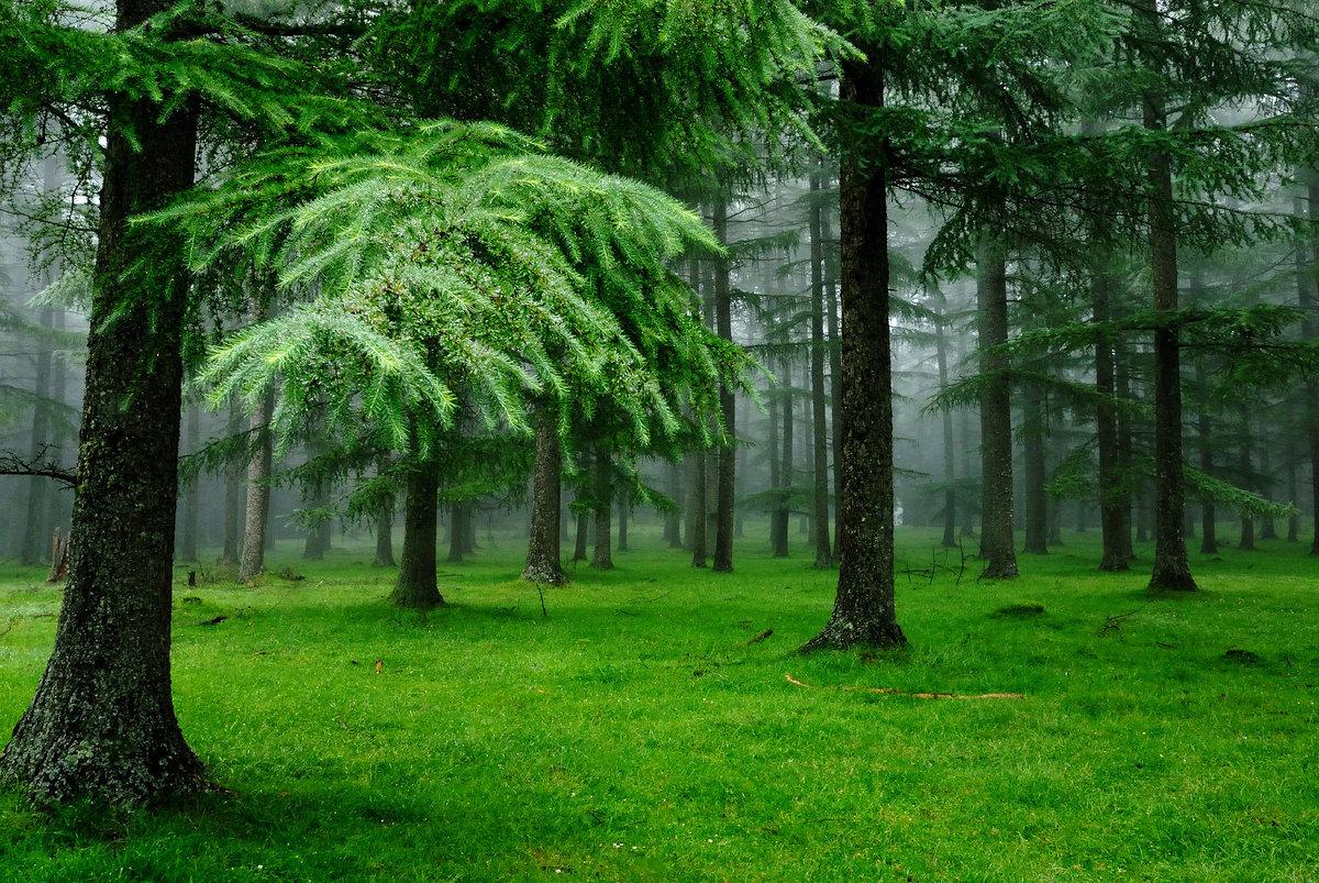 Женские имена, лес на картинках