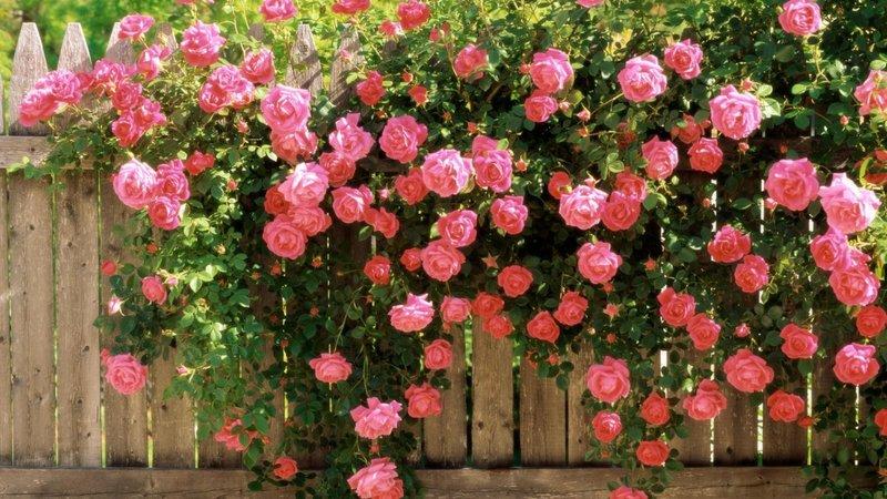 Картинки по запросу осенний сад цветы