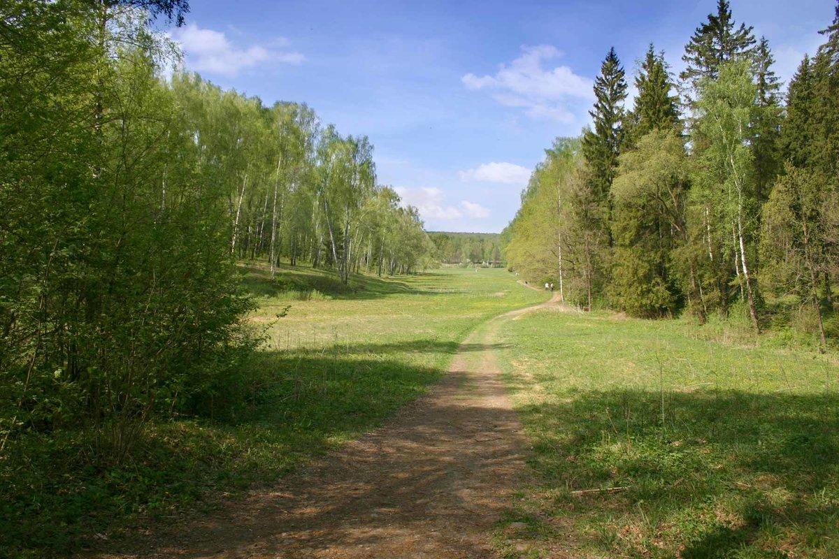 Фото зимнего леса красивые фото зимней природы