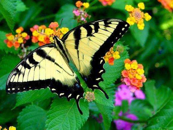 Красивые бабочки (11 Фото)