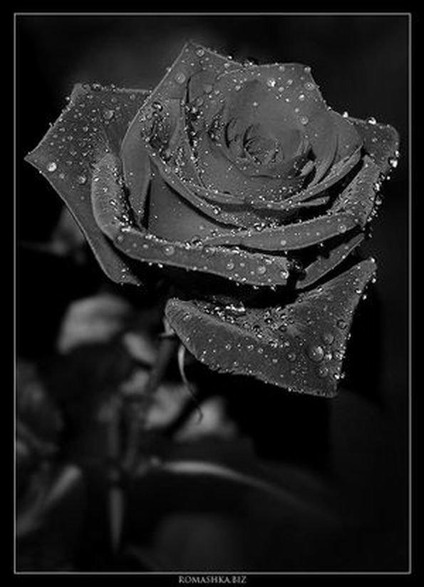 Мозг, картинки с черными розами анимация