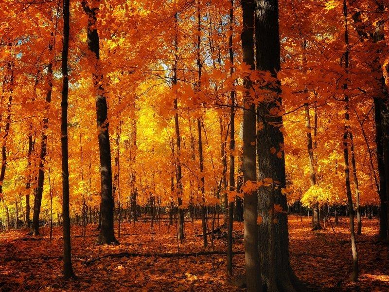 скачать картинки осенний лес